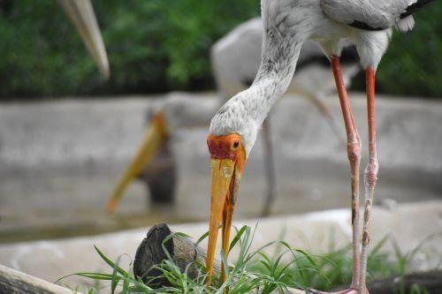herbivorous birds animal