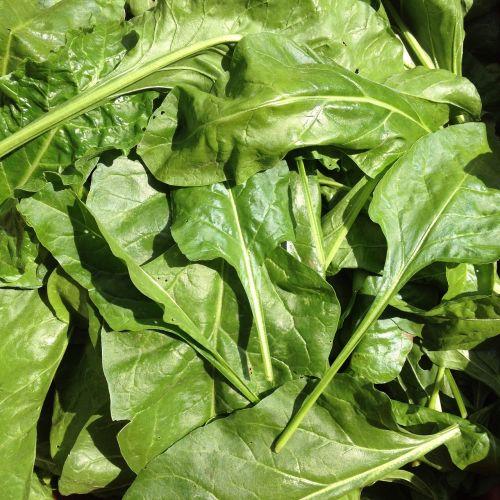 herbs vegetables plants