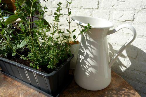 herbs plant pot