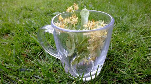 herbs herbal tea linden flowers