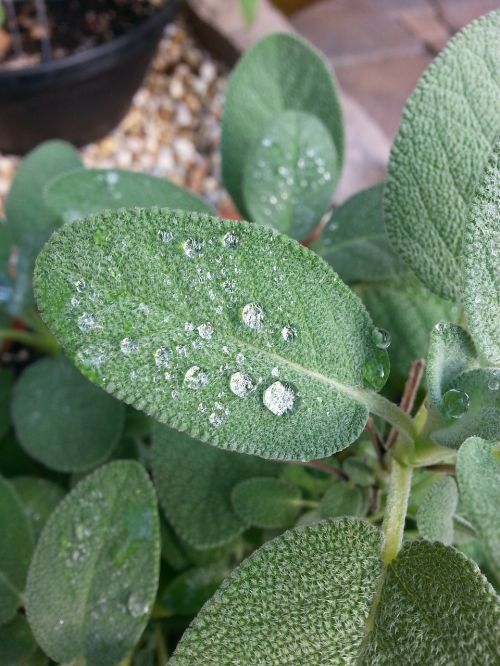 herbs water droplets water