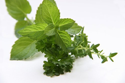 herbs  mint  thyme