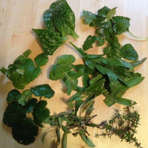 herbs tee herbal tea