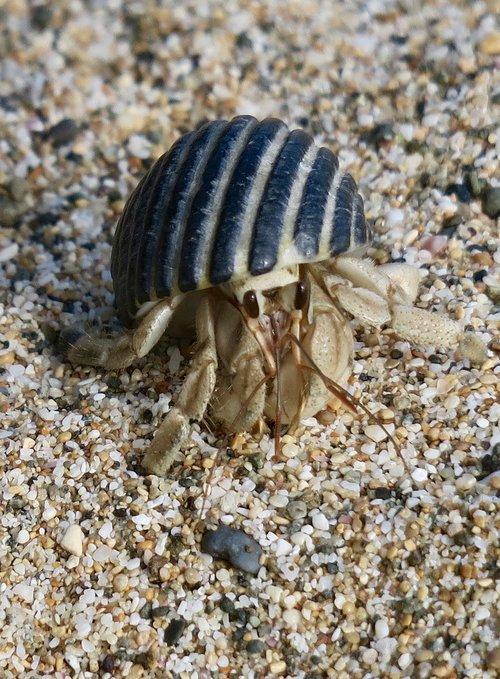 hermit crab  marine life  marine animals