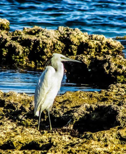 heron seabird wildlife