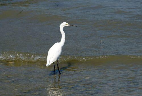 heron eastern water