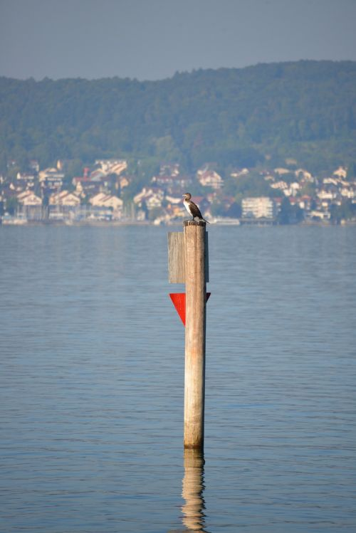 heron bird lake constance