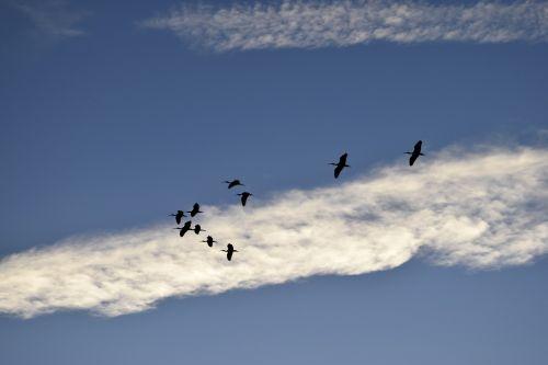 herons birds egrets