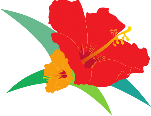 hibiscus bird's flowers red