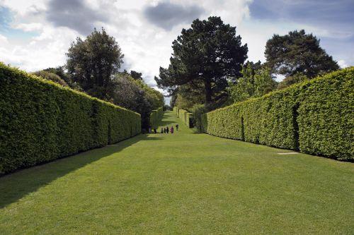 hidcote manor garden long avenue high enclosing hedges