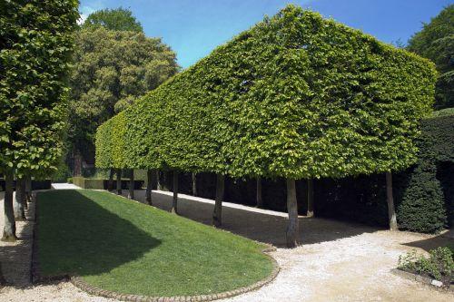 hidcote manor garden pleached hornbeam trees box form