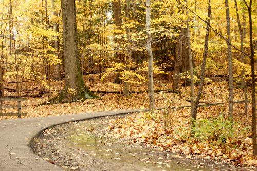 miškas, kelias, ruduo, kritimas, kelias, kelionė, geltona, taikus, ramus, tylus, paslėptas kelias per mišką
