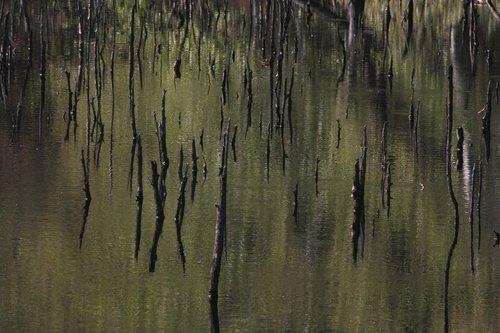 high moor  birch  mirroring