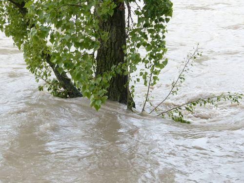 high water flooding tree