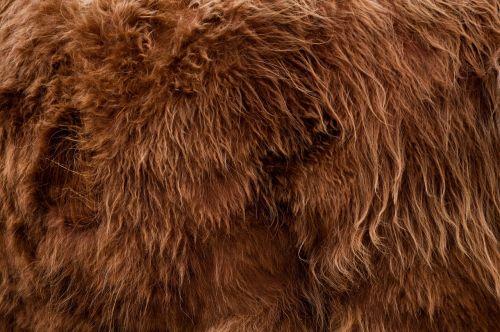 highlander animal fur