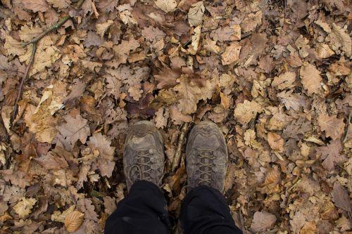 hiking leaves autumn