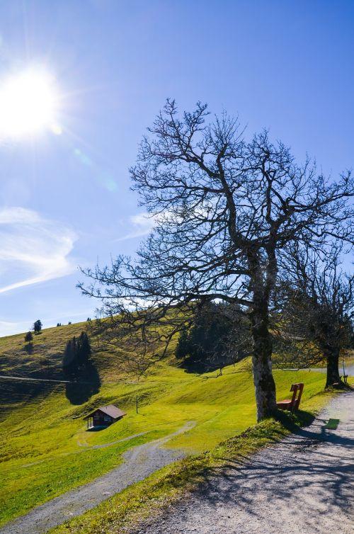 hiking mountain meadow tree