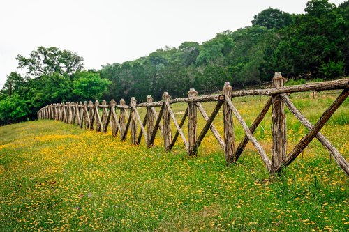 hill country texas  fence row  texas wildflowers