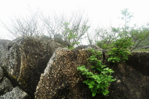 Hill Station In Monsoon 10