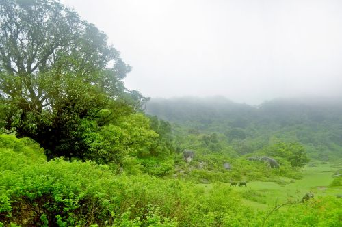 Hill Station In Monsoon 4