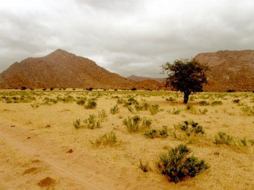 dykuma, kalnas, akmenys, medis, vienišas, nevaisinga, plikas, Namibija, erdvė, kietas, kalvos ir dykuma