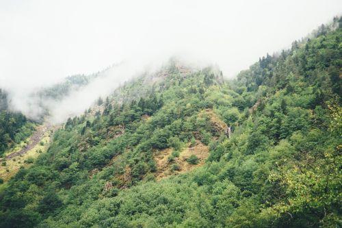 hillside mountain forest