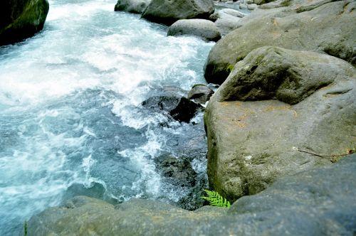 Himalayan Creek 18