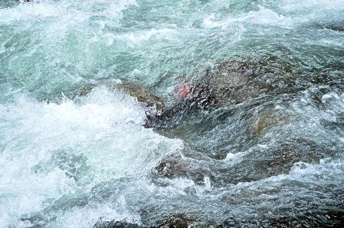 Himalayan Creek 5