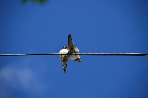 himmel birds thread