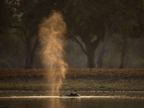 hippo hippo snort sunset