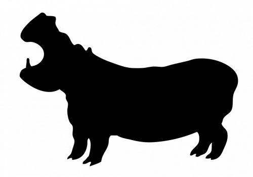 hippo hippopotamus black