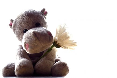 Hippo And Flower
