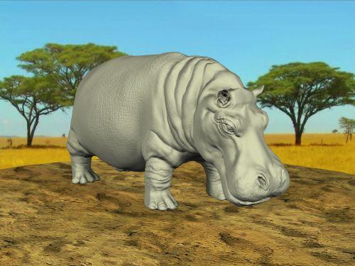 Hippo In 3d