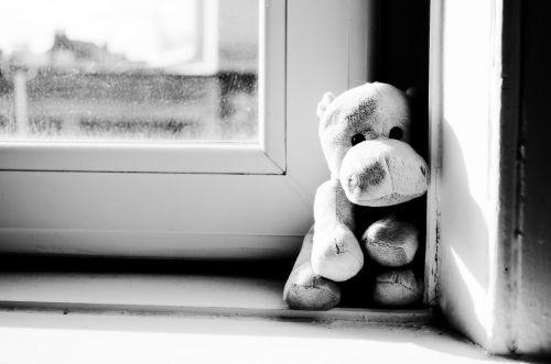 Hippo On The Window