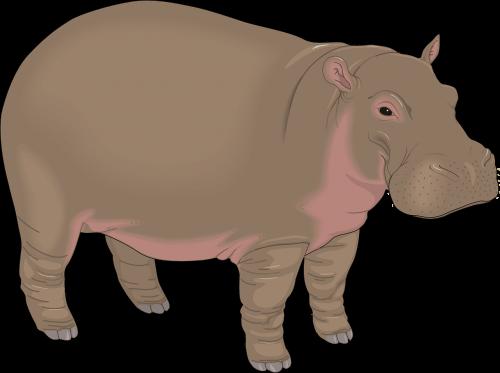 hippopotamus brown water