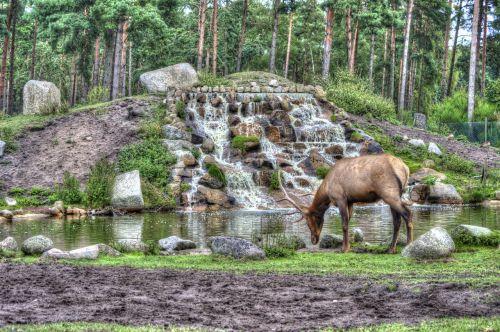 hirsch serengeti national park hang ha animals