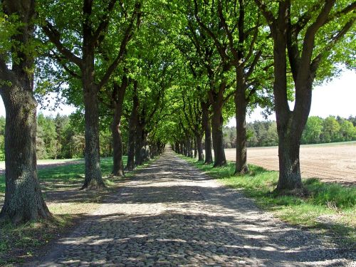 historical road verden of all avenue