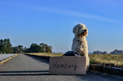 hitcher hitch-hike dog