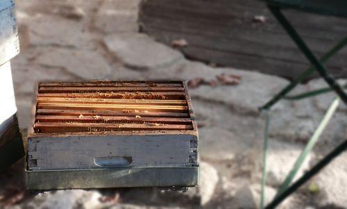 hive bees honey