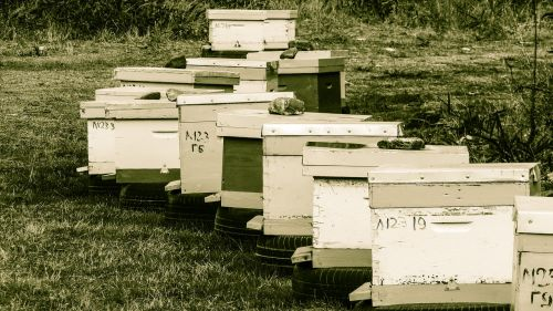 hive beehive apiculture