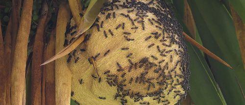 hive wasps grinders