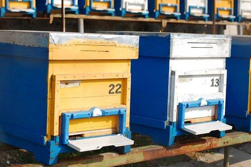 hives  bees  beekeeping