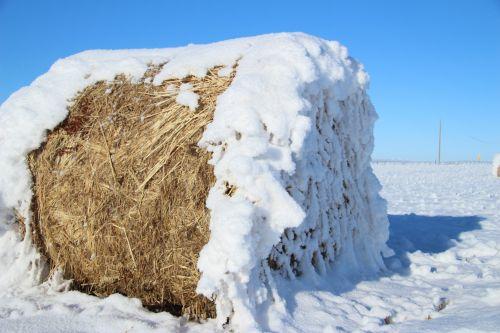 Hoar Frost Hay Bale