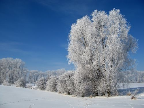 hoarfrost winter cold