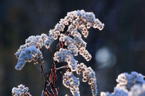 hoarfrost frost winter