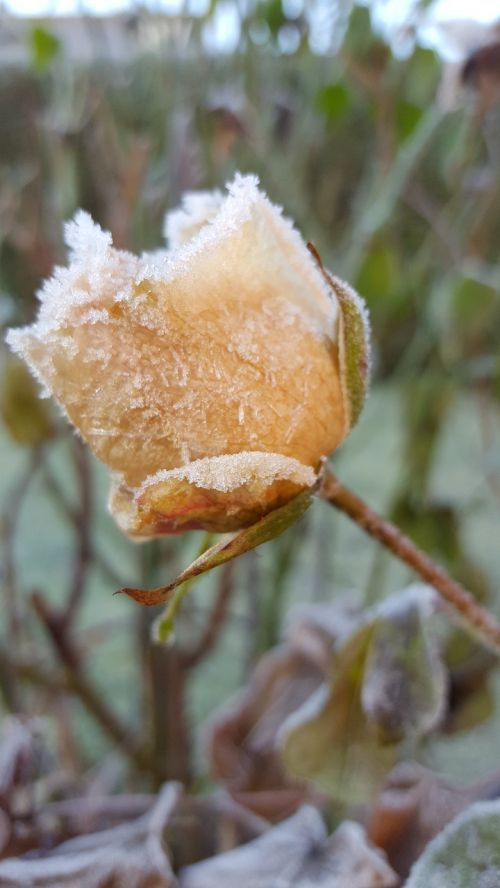 hoarfrost winter frost