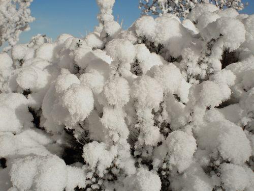 hoarfrost snow new zealand