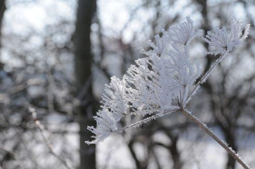 hoarfrost winter hardest