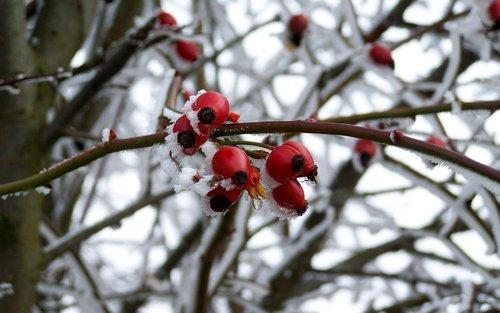 hoary  rimy  winter