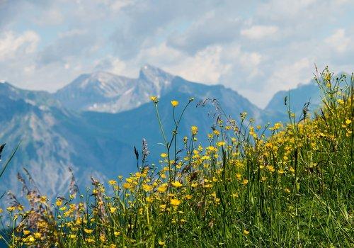hochjoch  mountains  mountain summer